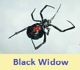 pest control black widow 47