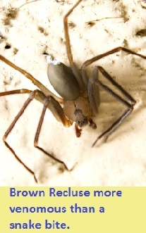 pest control for Brown Recluse 45