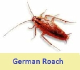 pest control german roaches 49