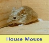 Pest control for mouse 51